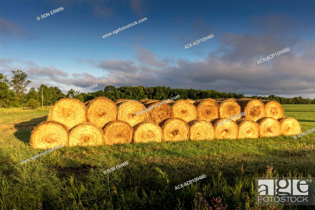 Photo de stock: Stacked round hay bales on Barrie Island, Manitoulin Island, Ontario, Canada.