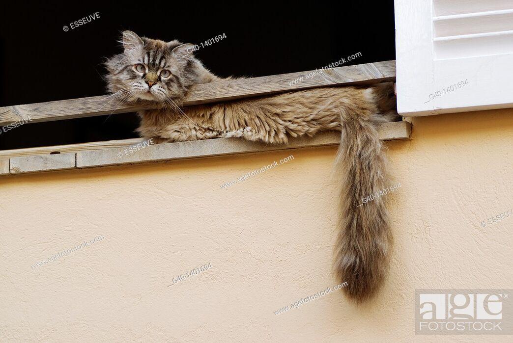 Stock Photo: Cat in the window. San Telmo, Majorca, Balearic Islands. Spain.