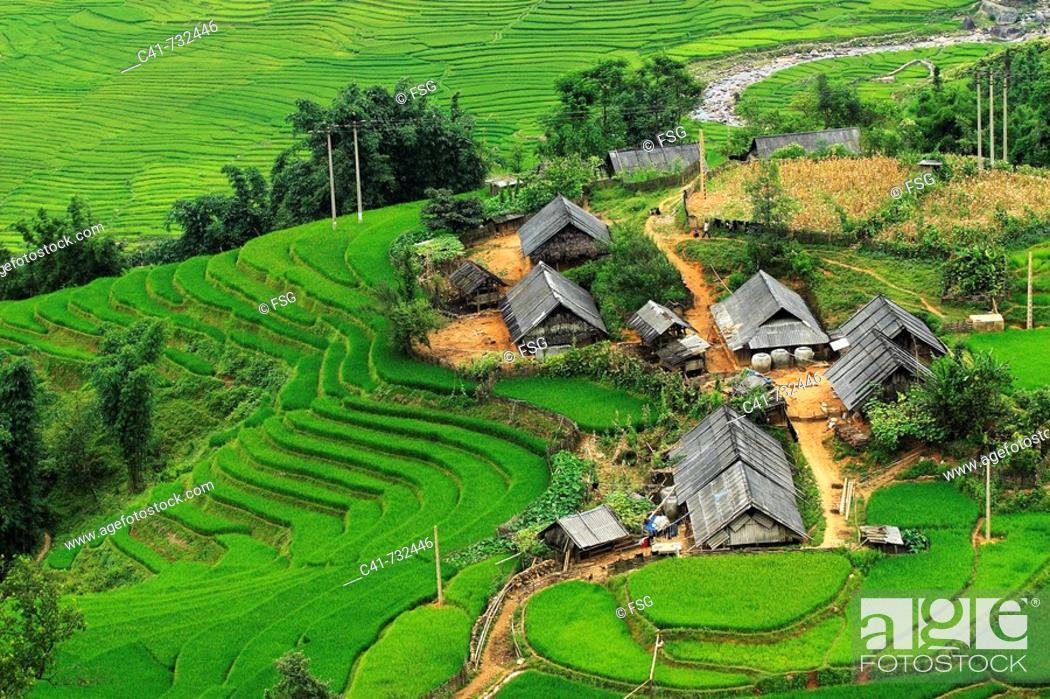 Stock Photo: Rice terraces, Lao Cai, Vietnam.