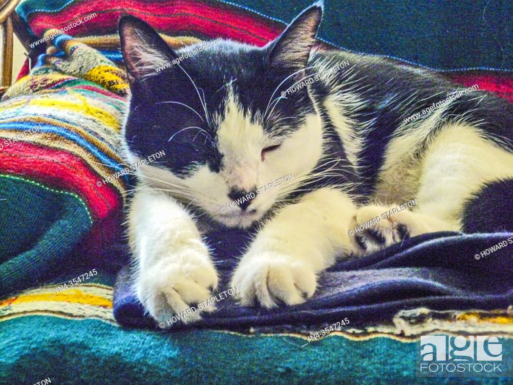 Stock Photo: Sleeping cat.