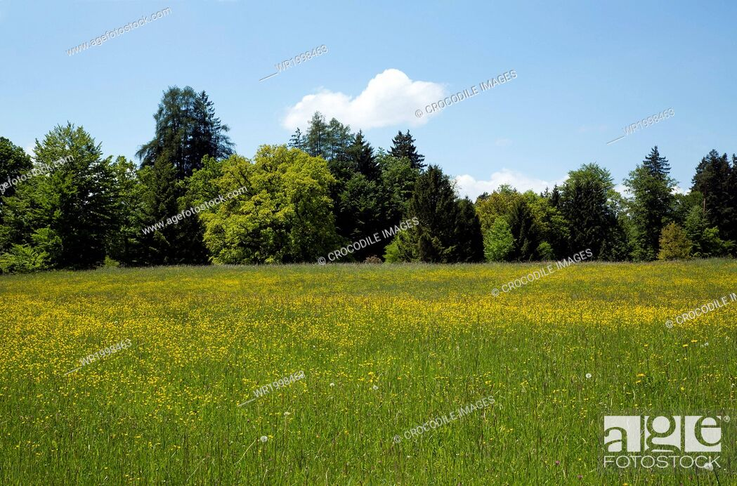 Stock Photo: Bavaria, Cloud, Day, Daytime, Europe, Field, Forest, Germany, Grass, Horizontal, Land, Landscape, Landscape Format, Location Shot, Meadow, Natural Light, Nature.