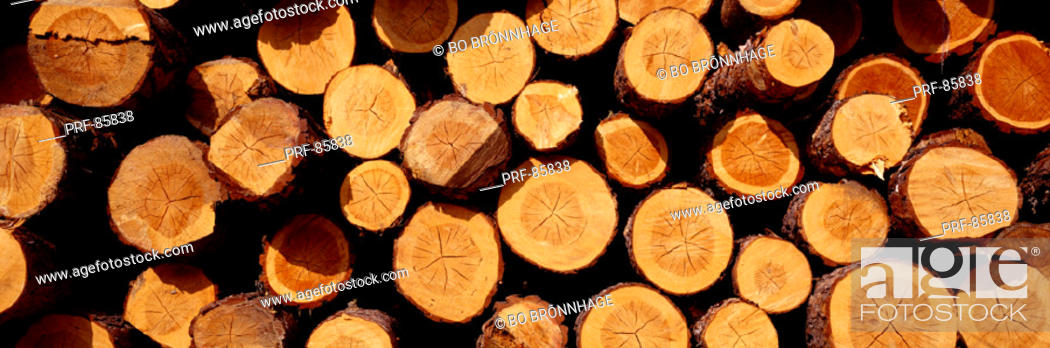 Stock Photo: Logs.