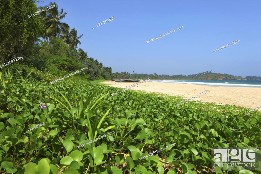 Stock Photo: Fishing boats at Talalla beach, Talalla, Matara, South coast, Sri Lanka, Asia.