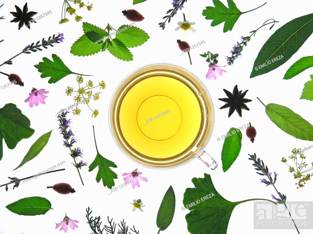 Stock Photo: Medicinal plants infusion.