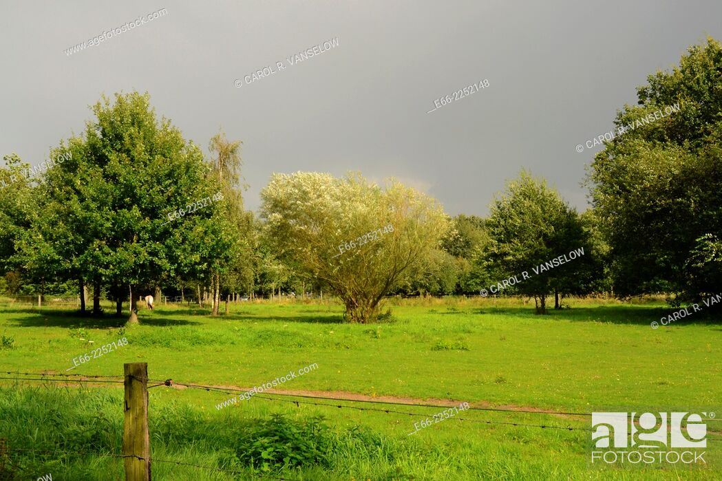 Stock Photo: Pasture still in sunlight as grey sky of thunderstorm approaches. Shot In Limburg province of the Netherlands.