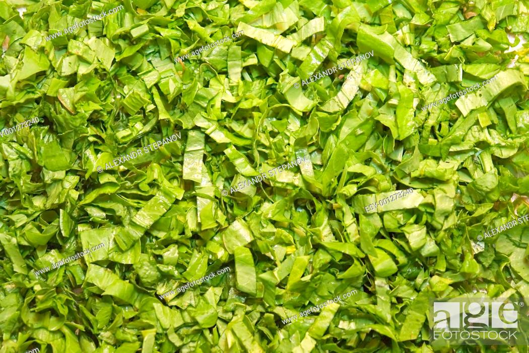 Stock Photo: cut green salad.