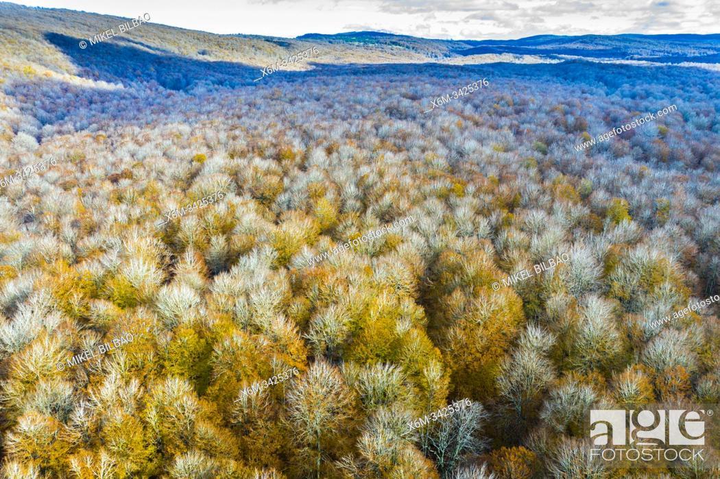 Stock Photo: Beechwood. Aerial view. Navarre. Spain, Europe.