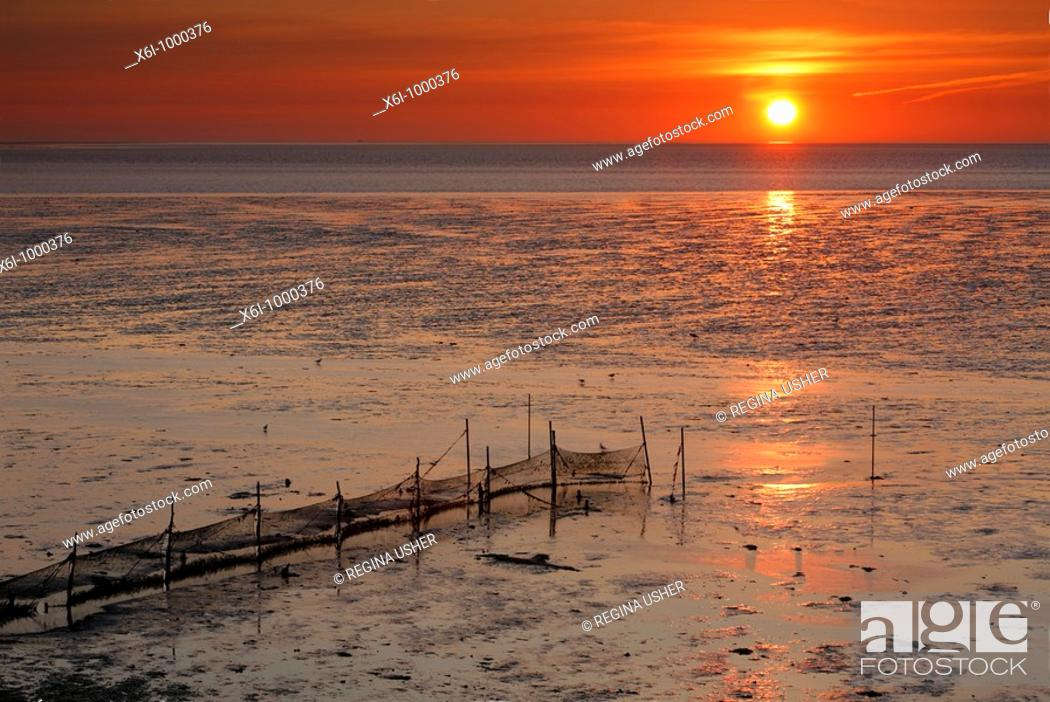 Stock Photo: Sunrise on the Wadden Sea at low tide, Texel Island, Holland.