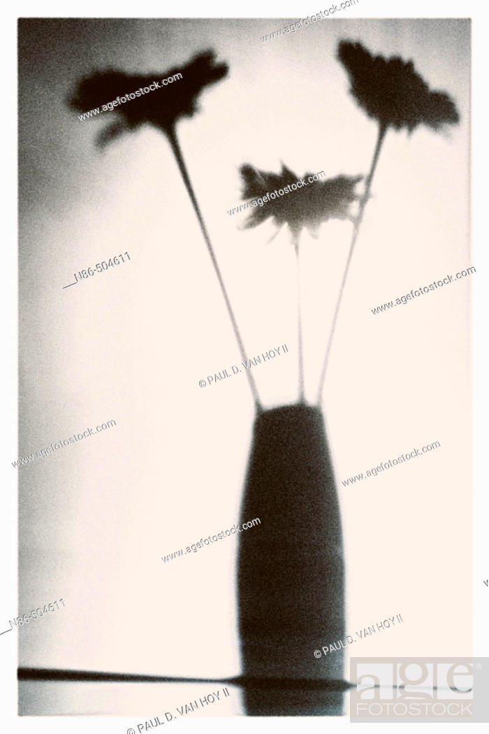 Stock Photo: Silhouette of flowers in a vase.
