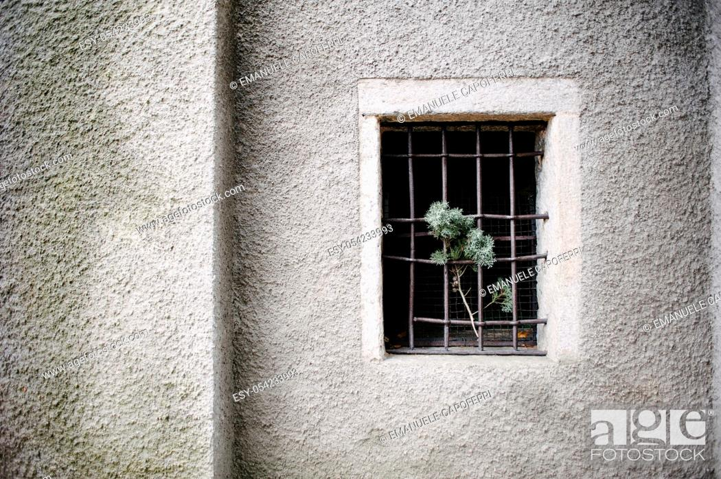 Stock Photo: Barred window.