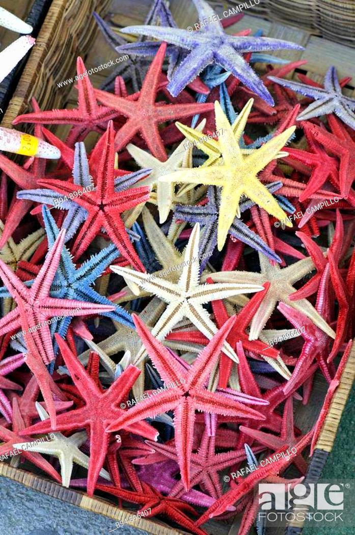 Stock Photo: Starfishes.