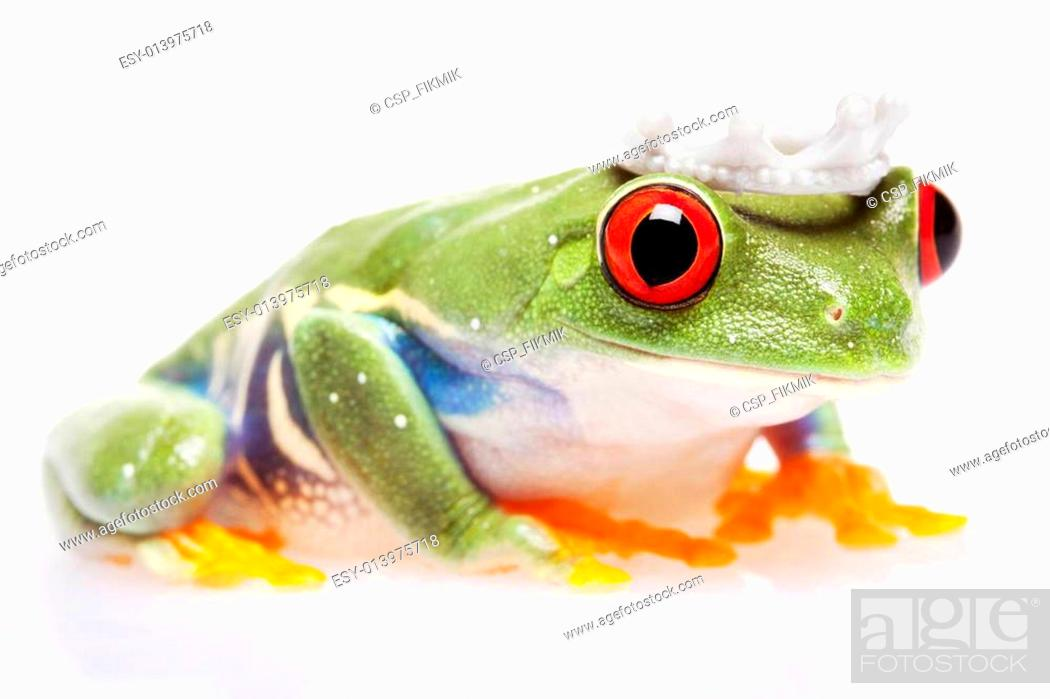Stock Photo: Green frog!.