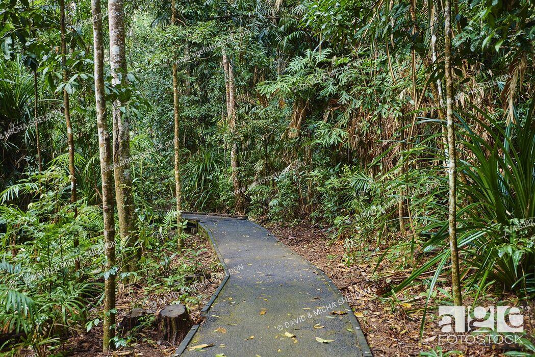 Stock Photo: Landscape a little walking path going through a rainforest in spring, Jumrum Creek Conservation Park, Kuranda, Queensland, Australia.