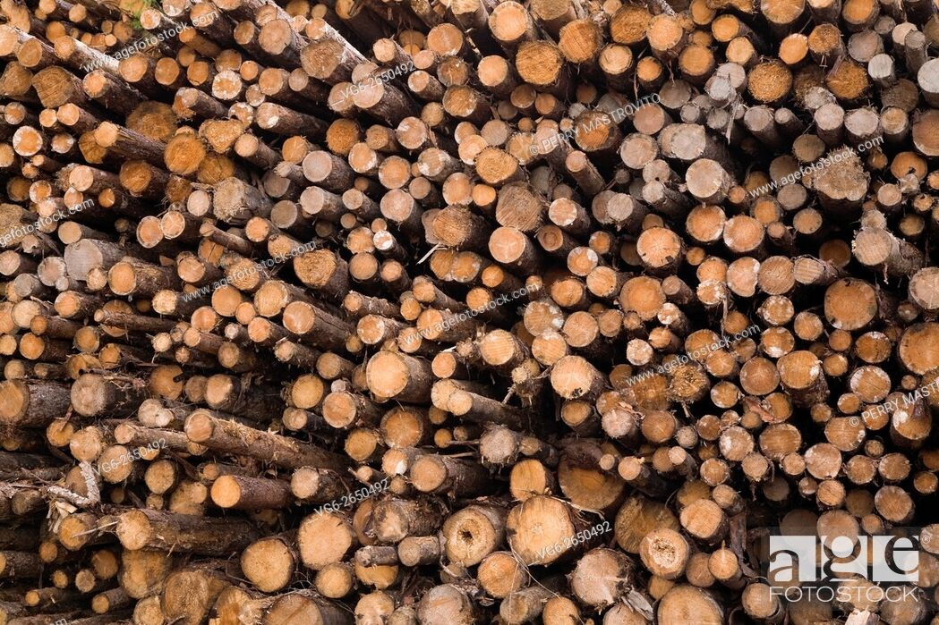 Stock Photo: Pile of cut timber logs at a lumber mill, Quebec, Canada.
