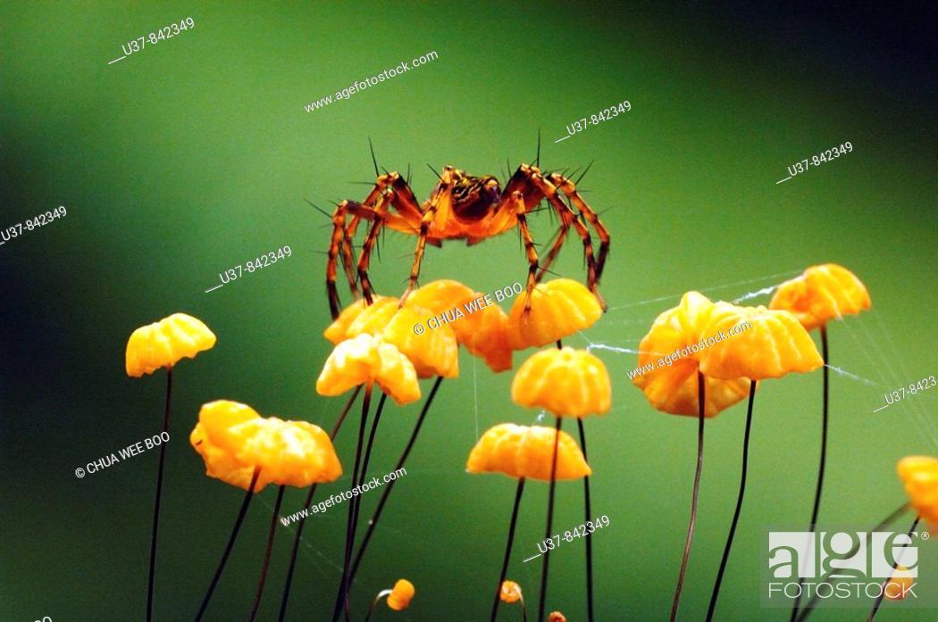 Stock Photo: Spider and mushrooms.