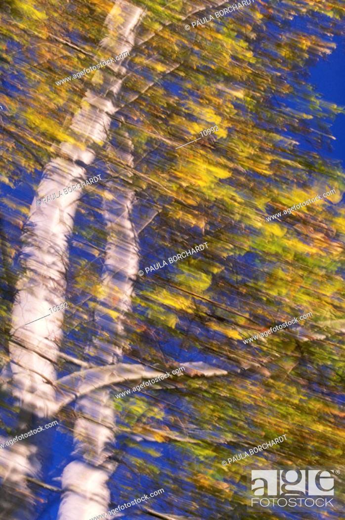 Stock Photo: Blurred tree with fall foliage.