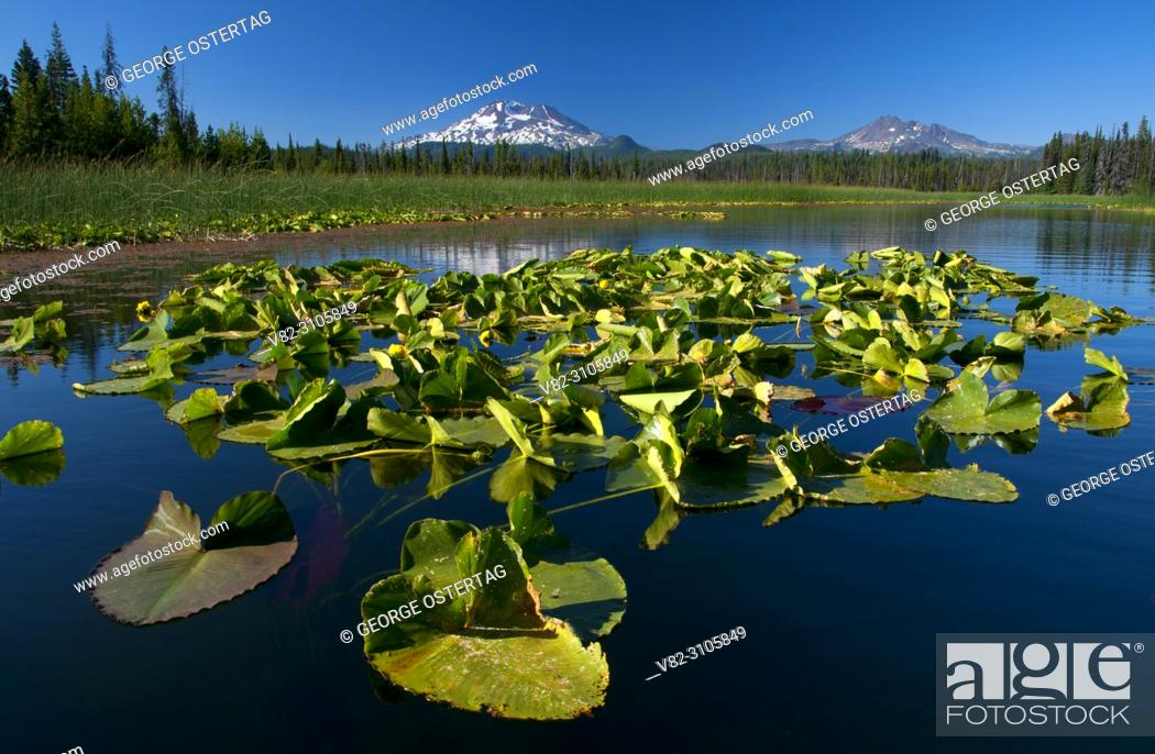 Stock Photo: South Sister from Hosmer Lake, Cascade Lakes National Scenic Byway, Deschutes National Forest, Oregon.