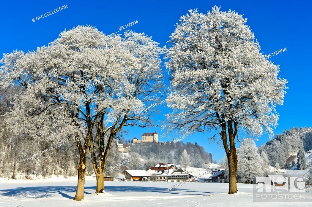 Photo de stock: Gruyeres Castle behind frosty trees on a cold winter day, Gruyeres, Switzerland.