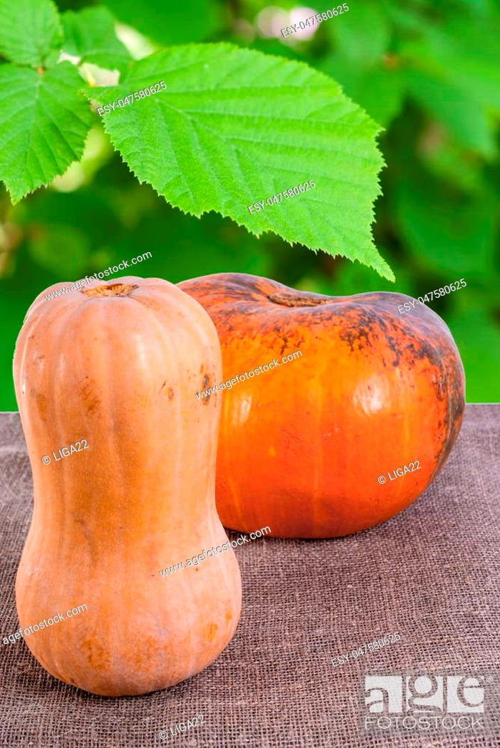 Stock Photo: Ripe pumpkins on fabric background with a green leaf in the background.