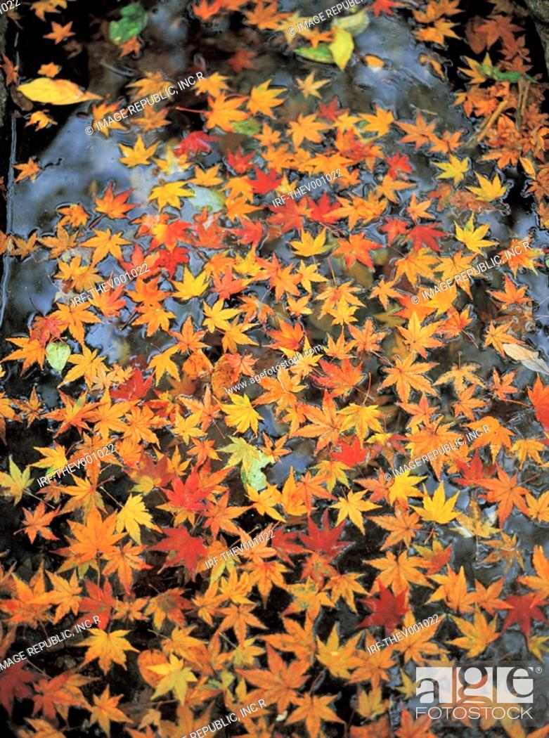 Stock Photo: fallen leaves on pond.