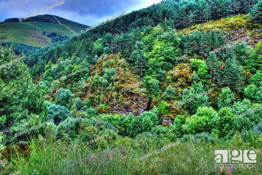 Stock Photo: Forest. Santa Cruz del Valle Urbion. Sierra de la Demanda. Burgos Province. Castilla y Leon. Spain.