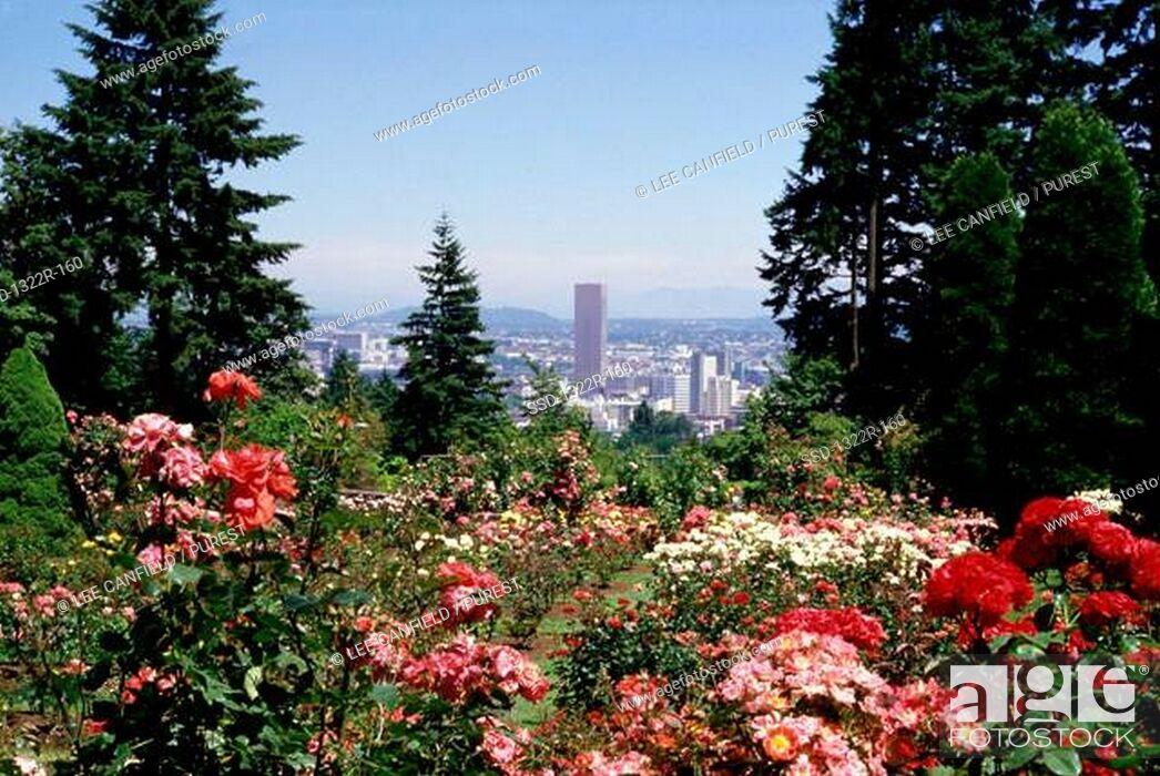 Stock Photo: Flowering plants, Portland, Oregon, USA.