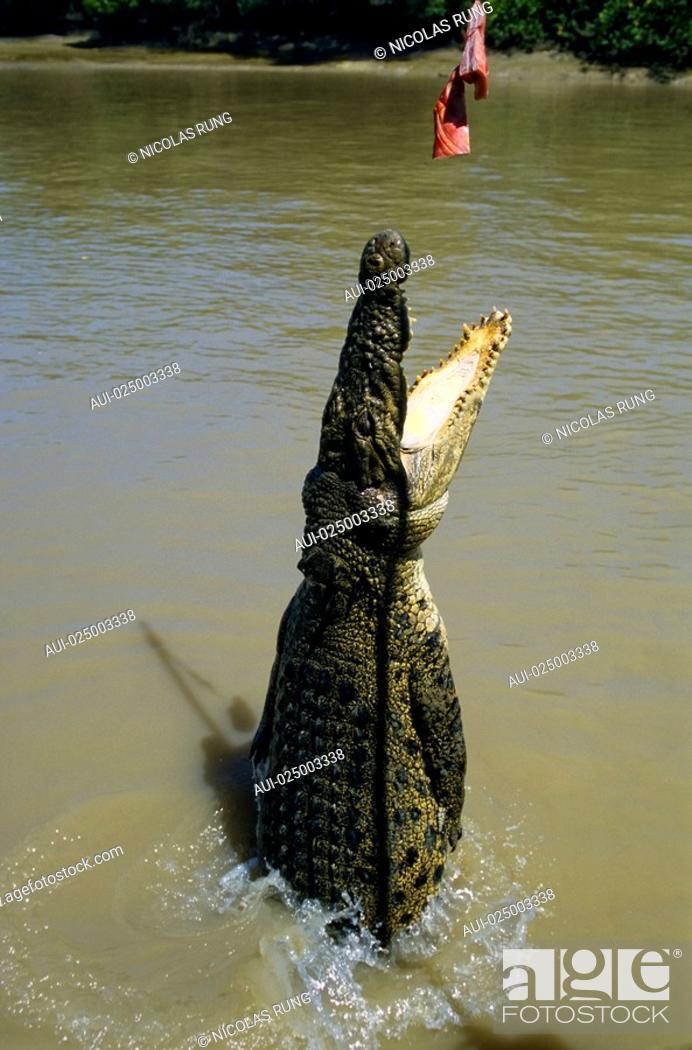 Stock Photo: Northern territory - Adelaîde river - Crocodile.