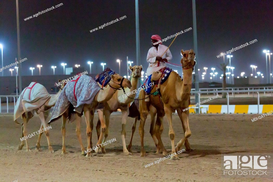 Imagen: Qatar - Al Sheehaniya - Camelodrome - Dromedaries trained at night.