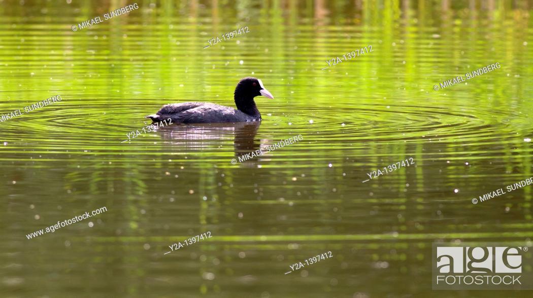 Stock Photo: sea bird.