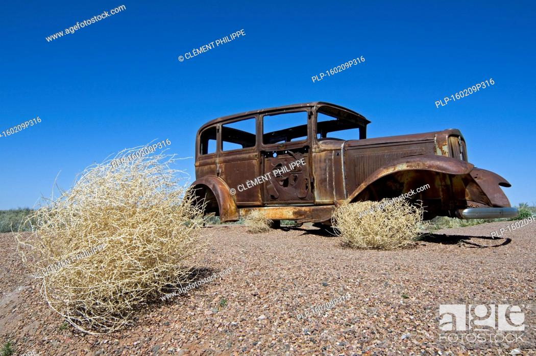 Old rusty car and Prickly Russian Thistle / Tumbleweed (Kali ...