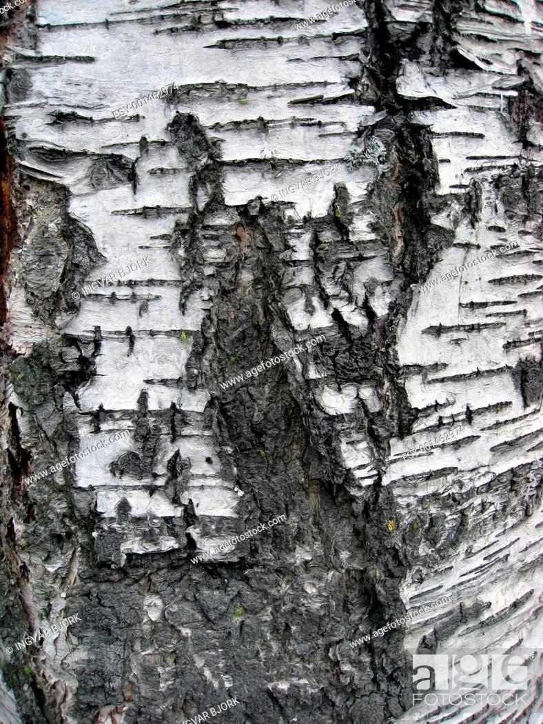 Stock Photo: Tree bark texture.