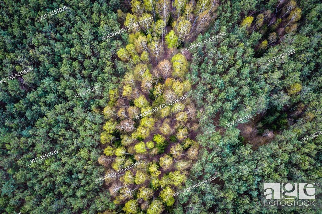 Stock Photo: View on a forest near Paplin village in the administrative district of Gmina Korytnica, within Wegrow County, Poland.