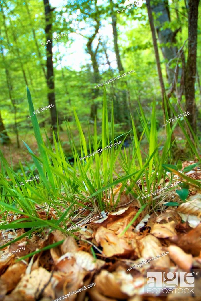 Stock Photo: Oak forest in summer  Navarra  Spain.
