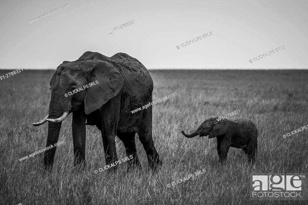 Stock Photo: Masai Mara Park, Kenya, Africa.