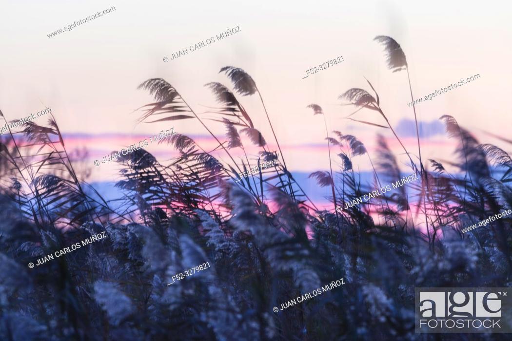Stock Photo: Wetland at sunset, Danube Delta, UNESCO WORLD HERITAGE, Tulcea County, Romania, Europe.