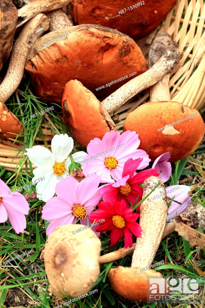 Stock Photo: Still life with mushrooms and flowers.
