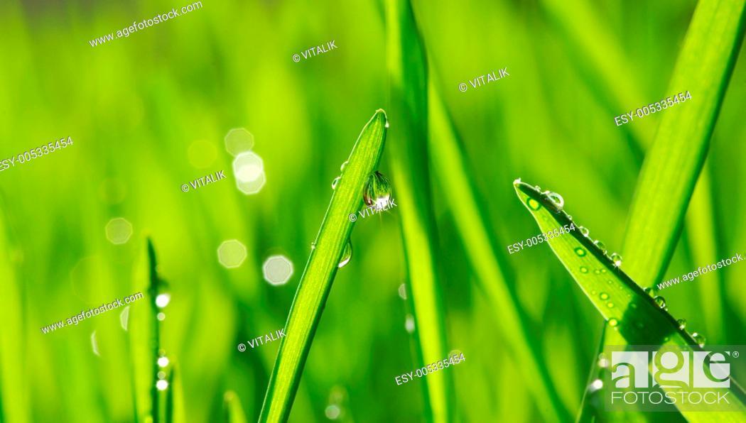 Stock Photo: drop on grass.