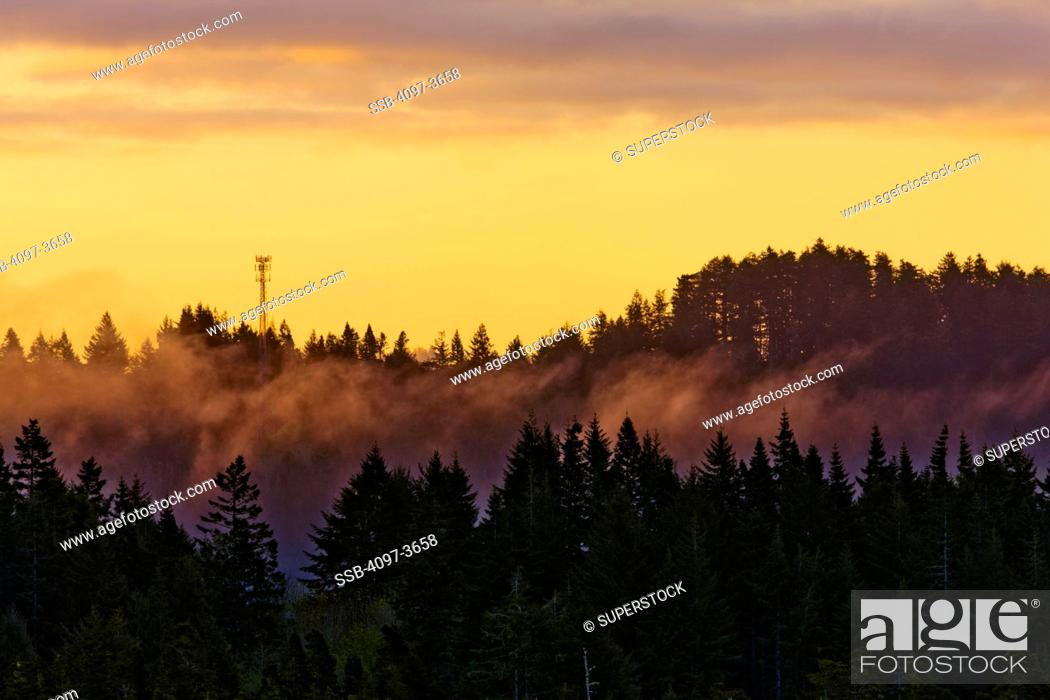 Stock Photo: Pine forest with transmissions tower in the background, Oregon Dunes National Recreation Area, Oregon Coast, Oregon, USA.