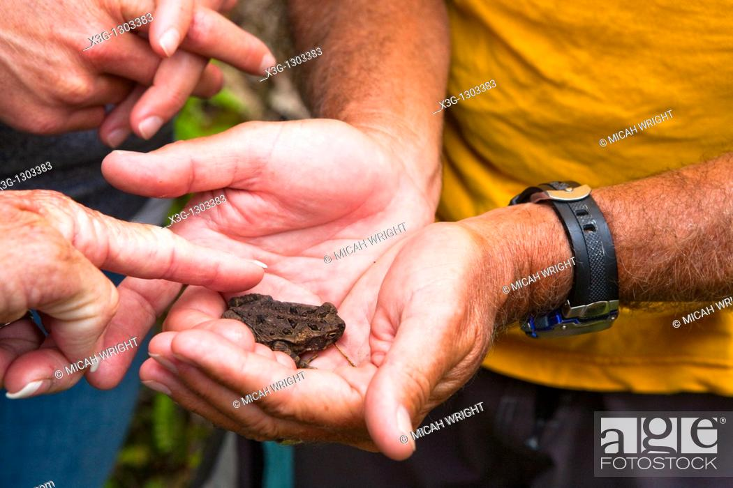 Stock Photo: The Kuilau and Moalepe trail begin near Wailua's Keahua Arboretum and travels up to views of Mt Waialeale and the ocean. Playing with one of the local toads.
