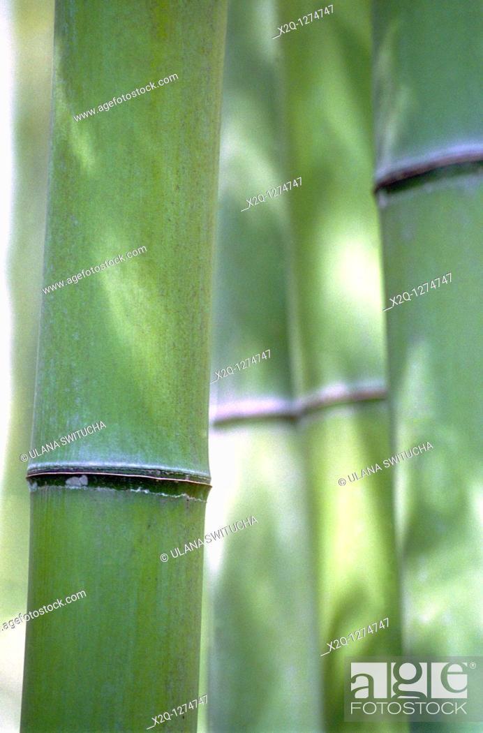 Stock Photo: Bamboo Arashiyama Japan.