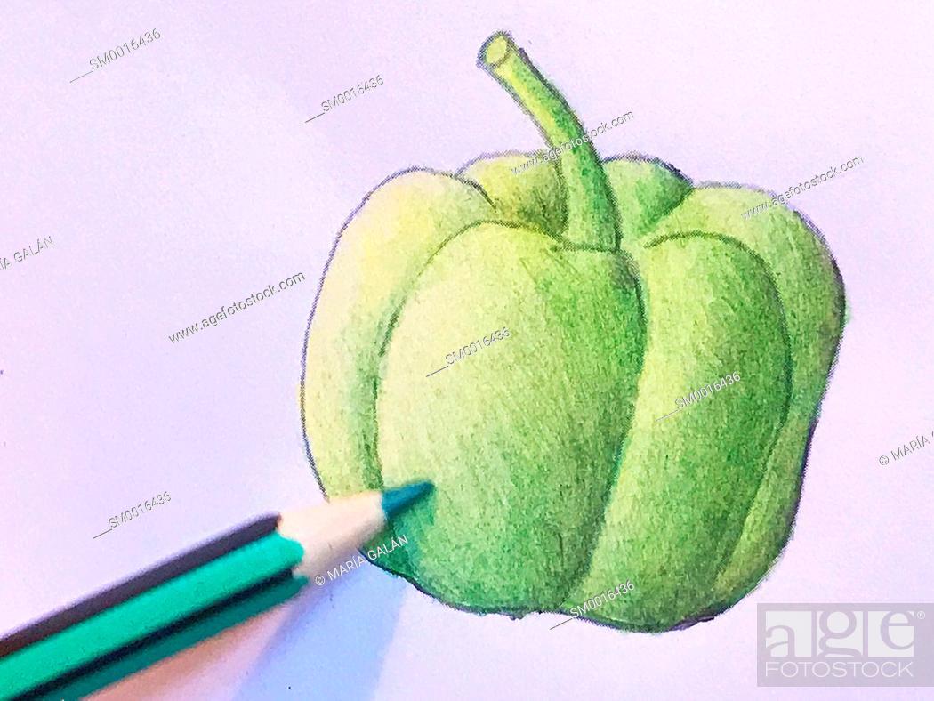 Stock Photo: Green pencil colouring a pepper illustration.
