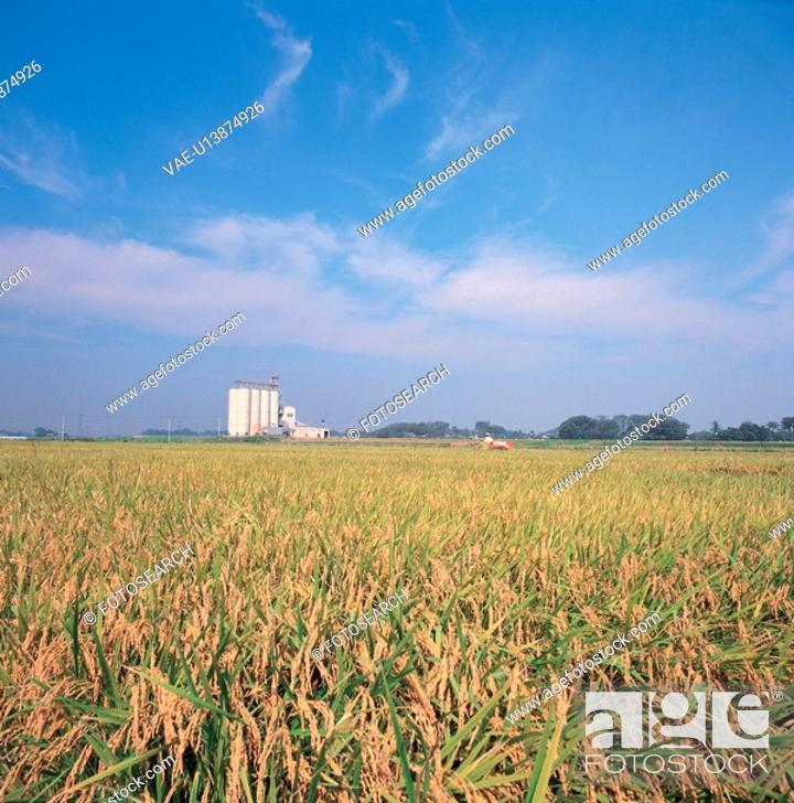Stock Photo: nature, cloud, rice field, landscape, scenery, sky.