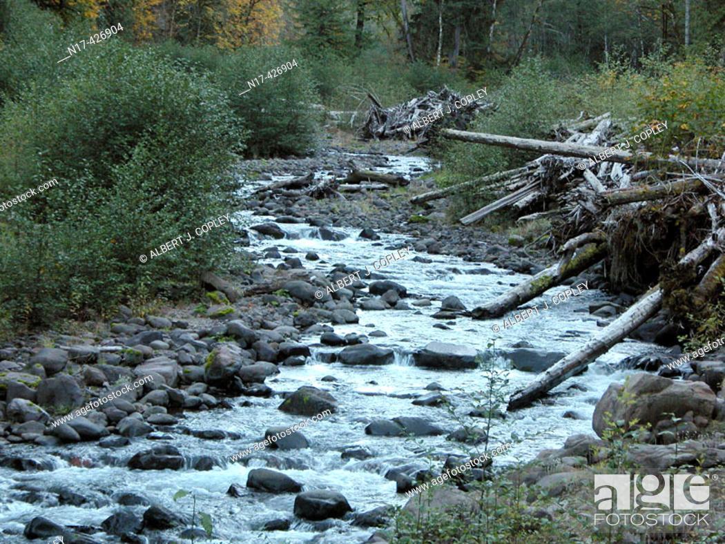 Stock Photo: Mountain stream. Oregon, USA.