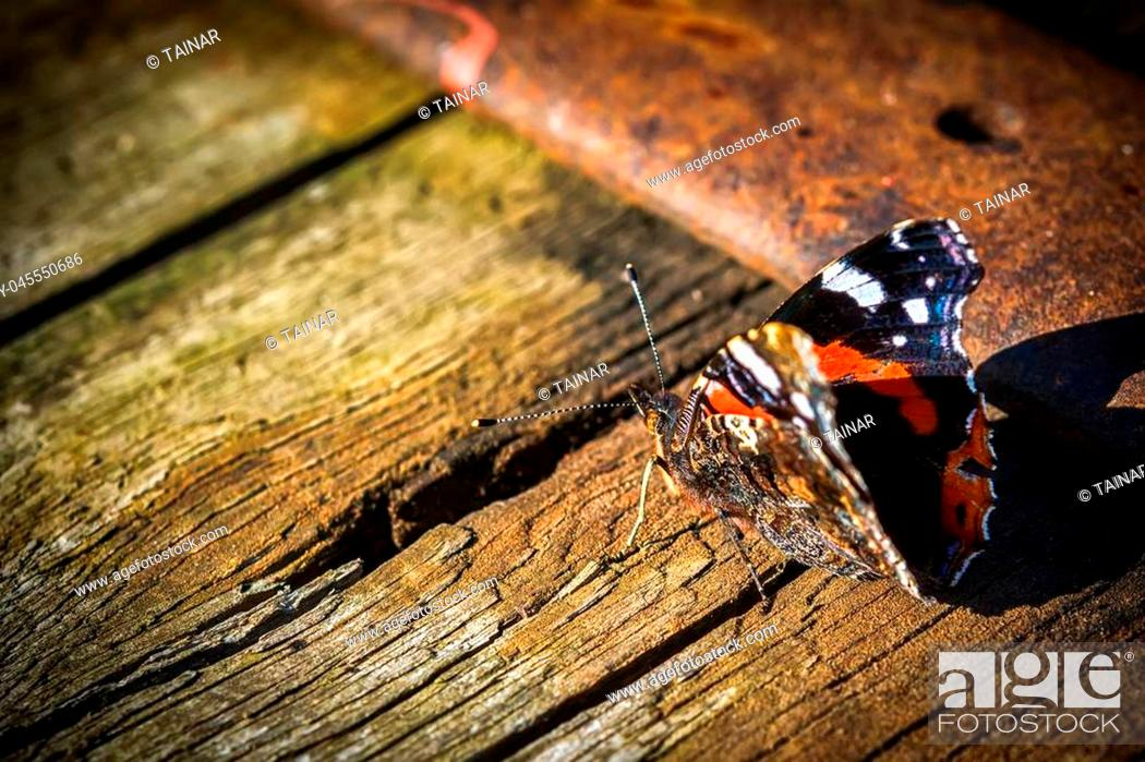 Stock Photo: Indian red admiral butterfly on a wooden background close up. Dark toned. Copy space.