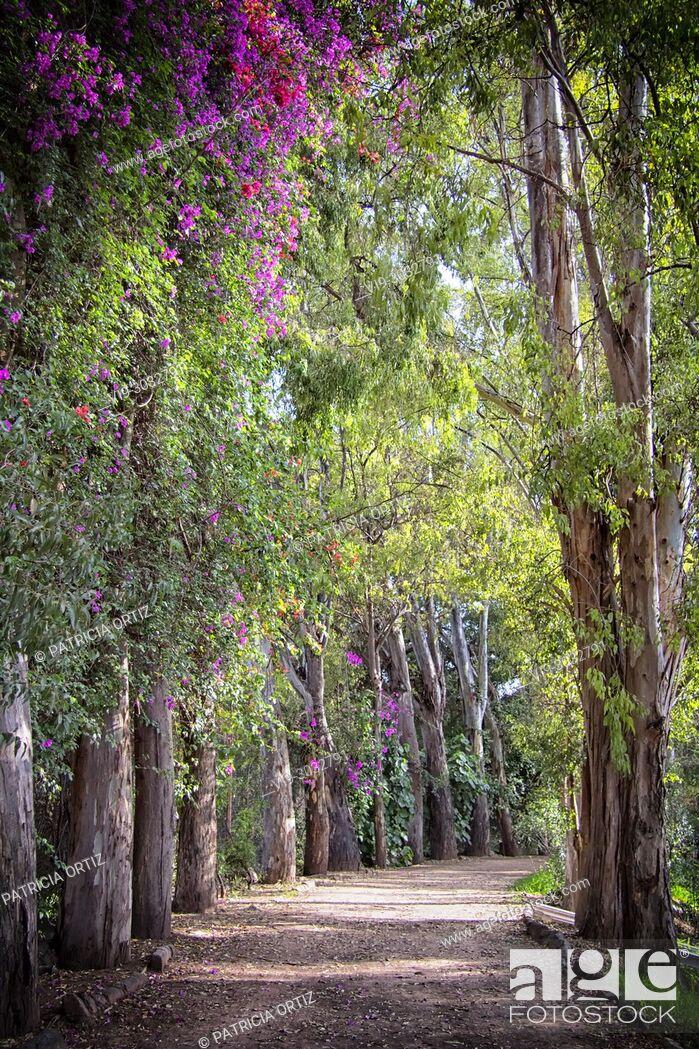 Stock Photo: Tree Path, in Galindo, Querétaro, MEXICO.