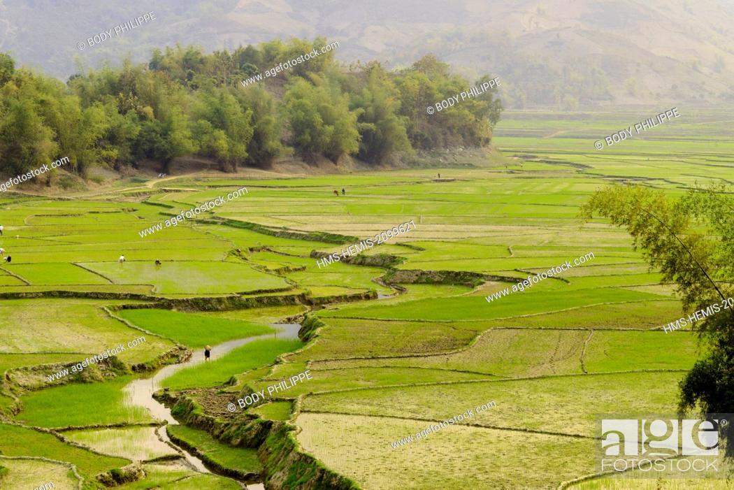 Stock Photo: Vietnam, Son La province, Phu Yen, ricefields, White Thai ethnic group or Tai Krao.