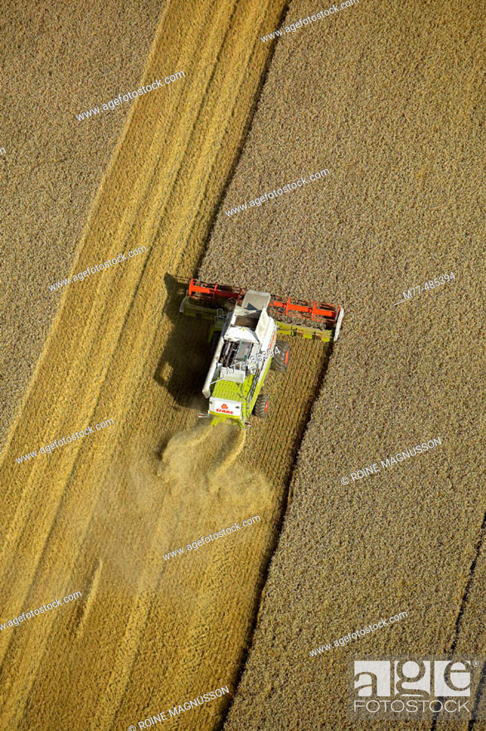 Stock Photo: Combine harvesting on agricultural field, aerial view. Skåne. Sweden.