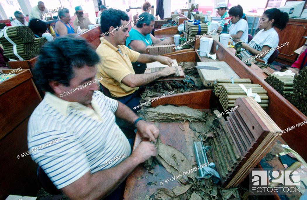 The Caribbean cigar factory  Calle Ocho  City of Miami  Florida  USA