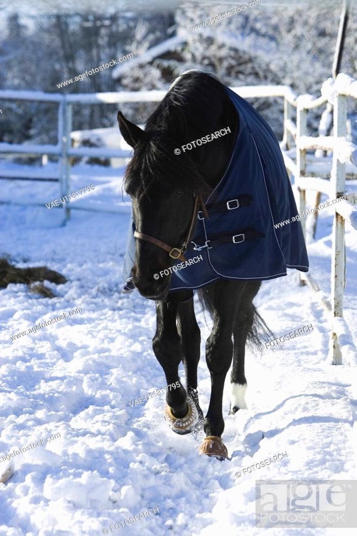 Stock Photo: Fence, Horse, Mammal.