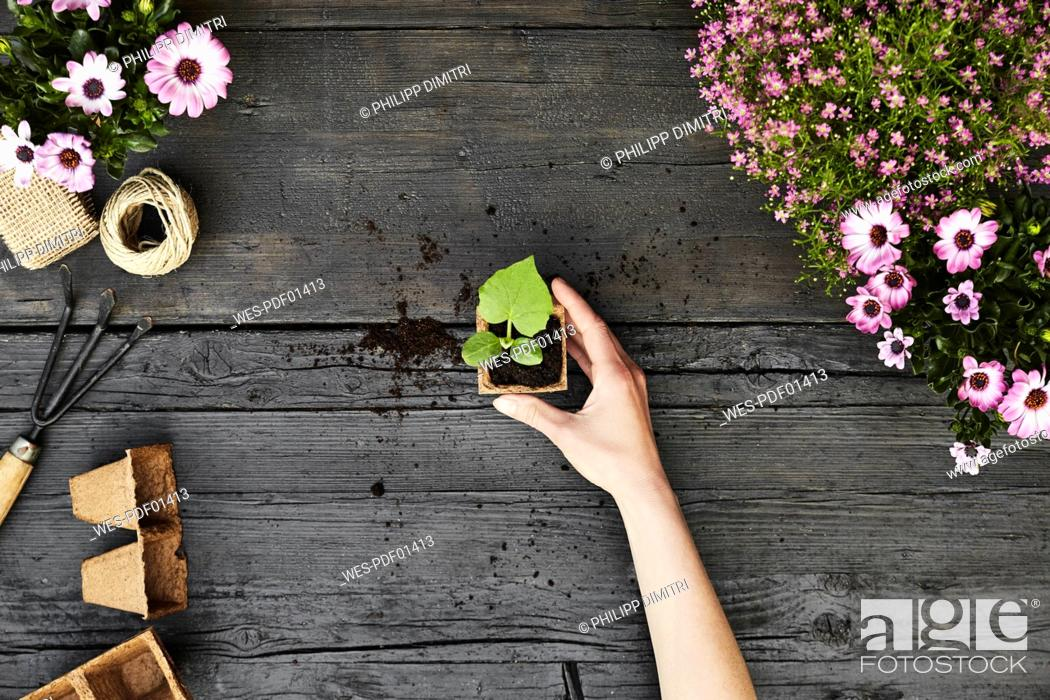 Stock Photo: Woman's hand hold seedling.